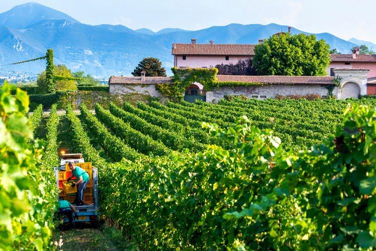 Franciacorta Wine Winery Italy