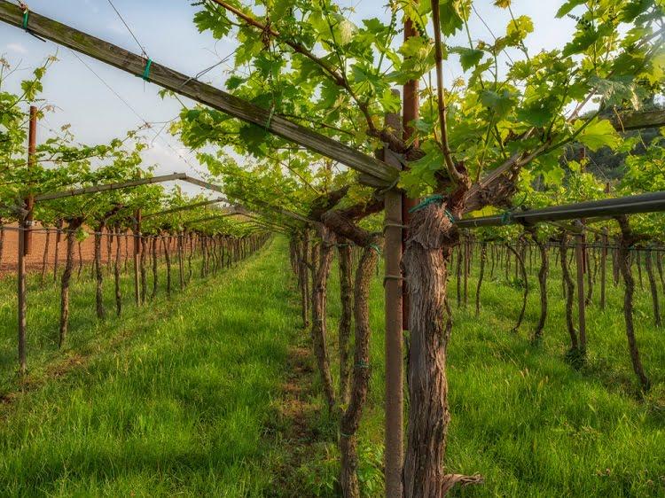Veronese Valpolicella wine luxury travel italy