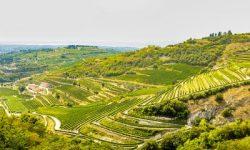 Valpolicella hills vineuards wine travel Italy