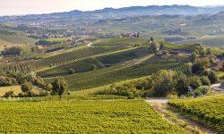Vineyards Piedmont Langhe Monferrato Wine Italy