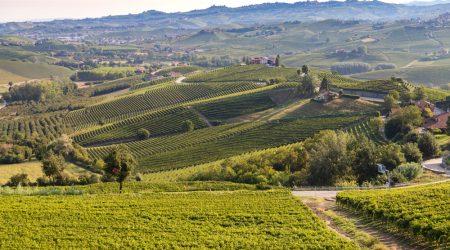 Green,Vineyards,In,Piemonte,Langhe,Monferrato