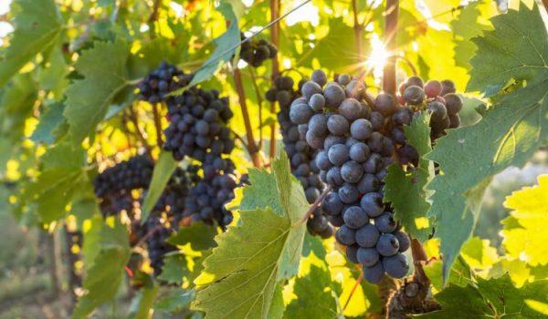 Wine Art Umbria Travel Italy