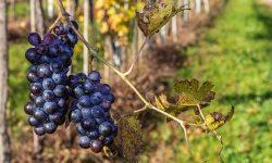Amarone Wine Italy Travel