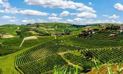 Roero Langhe Wine Vineyards Travel Italy