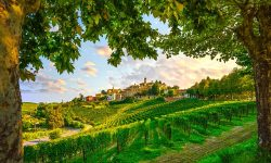 Langhe Trekking Wine Vineyards travel Italy