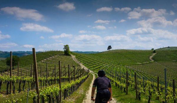 Langhe Bike Italy Travel Wine